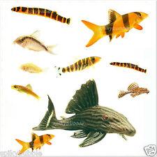 225g PREMIUM Pleco Tropical Catfish Fish Food Nuggets Better Than Algae Wafers