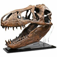 Master Replicas Smithsonian T-Rex Tyrannosaus Rex 1:4 Maßstab Fossil Skull Neu