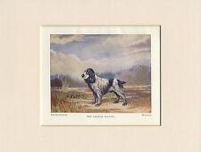 COCKER SPANIEL LOVELY LITTLE 1930'S DOG PRINT by WARD BINKS READY MOUNTED