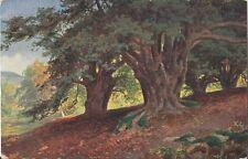 Postcard Nister #157 In Druid's Grove UK Surrey Norbury Park Mickleham  ca1910