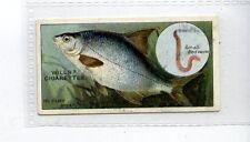 (Jd4609) WILLS,FISH & BAIT,THE SILVER BREAM,1910,#16