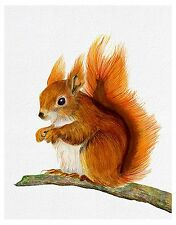 Red Squirrel Watercolour Painting A4 Signed Limited Edition Print Wildlife Gift