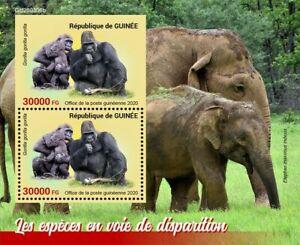 Guinea Wild Animals Stamps 2020 MNH Endangered Gorillas Elephants 2v S/S + IMPF