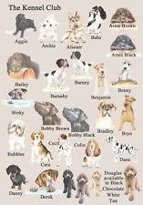 Cavapoo, Cockapoo, casa de perro y otras razas disponibles de placa de casa