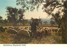 Ethnic native Postcard Bethleem Sheperd field