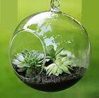 8cm/10cm Hanging Glass Flowers Plant Vase Stand Holder Terrarium Container