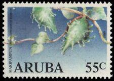 """ARUBA 44 - Maripampun Flower """"Omphalophalmum rubrum"""" (pb18708)"""