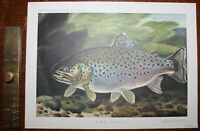 1962 The Trout ORIGINAL PRINT by Bernard VENABLES Angling Fishing Fresh Water