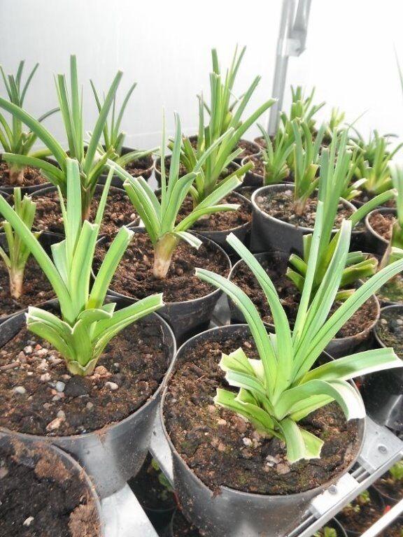 plantmad48