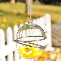 10cm Glass Hanging Ball Sphere Bauble Plant SUCCULENT TERRARIUM  BUY QTY REQD
