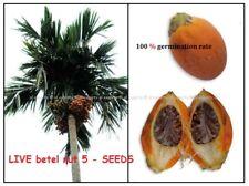 *5* SEEDS 100% Germination ,Areca Catechu, betel nut palm,bing lang, Palm seeds