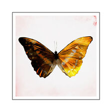 Butterfly A1+ High Quality Canvas Art Print
