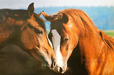 (LAMINATED) HORSE LOVE TENDERNESS POSTER (61x91cm)  NEW LICENSED ART