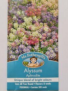 Outdoor Garden Patio Perennial Flower Flowering Alyssum Aphrodite 300 Seeds