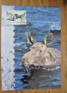 FINLAND ALAND ISLANDS MOOSE 2000 FIRST DAY CANCELED POSTAL CARD