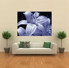LILY LILIES FLOWER NEW GIANT POSTER WALL ART PRINT PICTURE G154