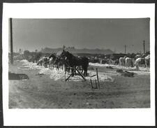 RINGLING BROS BARNUM & BAILEY CIRCUS HORSES BIGTOP TENT PHOTO (67)