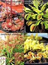 Drosera x2 species - Dionaea muscipula x1 - 200 Zaden/seeds/Samen/graines