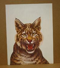 Kentucky Wildcat CW Vittitow Wildlife Kentucky Artist University of KyUK Mascot