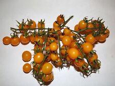 Tomate goldene Johannisbeere - 5+ Samen-GOLDENER KAVIAR!