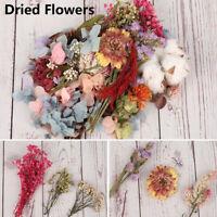 1 boîte vraies plantes fleurs séchées Pr fabrication bijoux en résine époxy b D1