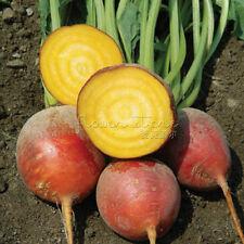 100 Annual  Golden Beet Seeds Heirloom Rich flavor Easy care  TT160