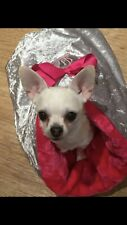CHIHUAHUA DOG PET PUPPY BED CRUSHED VELVET PINK FAUX FUR SNUGGLE SACK