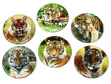 Tigers Big Cat Fridge Magnets Set 55mm 6pc Wild Animal Kitchen Decor Gift