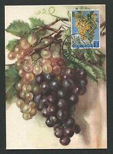 SAN MARINO MK 1961 FLORA WEINTRAUBEN TRAUBE WINE GRAPE UVA MAXIMUM CARD MC d5564