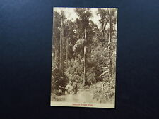 postcard Singapore Asia Malayan Jungle Road transport Lamert & Co Unused