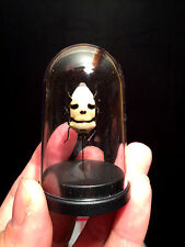Cabinet of curiosities Globe Insect Bug head of death Indonesia WOW