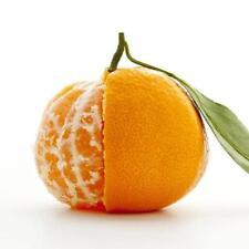 10Xbonsai seeds Orange Tree Orange for home little orange tree new style