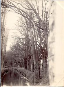 Nature, arbres et cours d eau Vintage silver print Tirage argentique  8x11