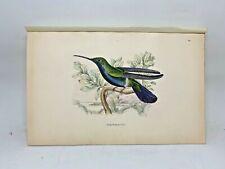 DELUXE ED Hand-colored Plates 1840 Jardine History Hummingbirds #20 Mango