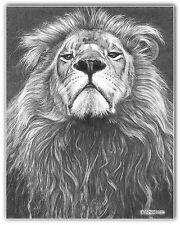Wildlife WALL ART PICTURE Leo Animale B/W a3 POSTER Schizzo Disegno Leone Stampa