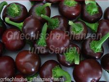 Chocolate Cherry peperoncino marrone/NERO 10 FRESCO SEME balcone vaso