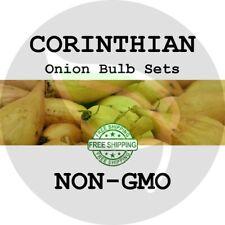 Corinthian Onion Sets (Yellow Bulbs) - Non-Gmo - Seed Plant Start Garden Spring