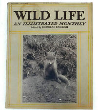 Wild Life animal photo magazine Douglas English June 1913 mole squirrel animal