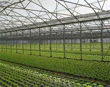 Greenhouse Film 7.5M x150um x 10M Roll Clear Clear Nursery Hot House Plastic