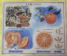 Objet de Métier Affiche Scolaire :La Récolte des Orange Agrumes