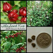20+ ROSELLE SEEDS (Hibiscus Sabdariffa) Edible Rosella Fruit Perennial Fast Grow