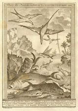 'Chasse de poissons volans'. Birds hunting flying fish South Africa. SCHLEY 1747
