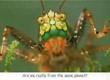 Spotted Katydid, From The Same Planet, Funny Insect Greeting Card - Not Postcard