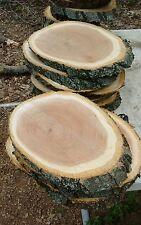"5 Oval Cut oak Tree Log Slice 12-13 in"" Rustic Wedding Slab Cabin picture Plaque"