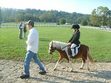 Brown Leather English Bridle Caveson Reins Miniature Mini Horse or Shetland Pony