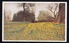C. 1960s View of crocuses in bloom at the Royal botanic Gardens, Kew