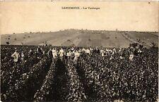 CPA   Dannemoine - Les Vendanges     (357725)