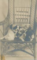Five Dogs Room For One More In Front Real Photo Postcard rppc - udb (pre 1908)