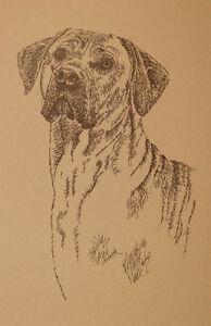 Rhodesian Ridgeback Dog Art Portrait Print #44 Kline adds your dogs name free.