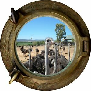 Huge 3D Porthole Ostrich Farm View Wall Stickers Film Mural Decal Wallpaper 239